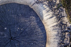 Sliced Tree (Photo)