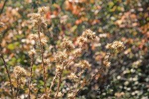Dry Plants (Photo)