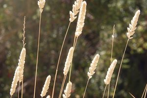 Sunlight On Grass - A (Photo)