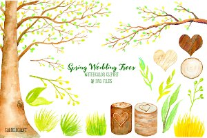 Wedding Tree - Spring Beech