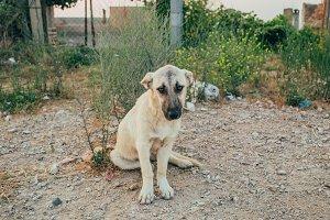 Beautiful homeless puppy