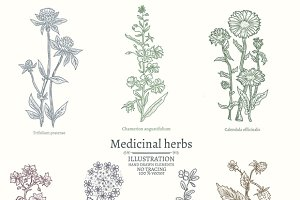 Medical herbs collection
