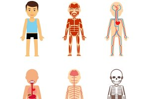 Body anatomy