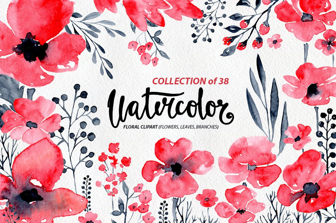 38 Watercolor Poppy Flowers Leaves Graphics Creative Market