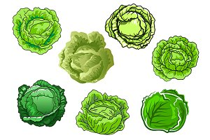 Green fresh cabbage vegetables