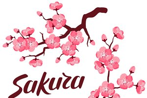 Japanese sakura set of branches.