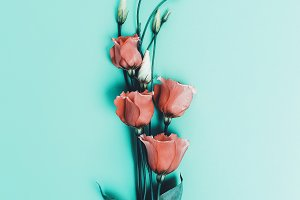 Flowers. Minimalism Fashion