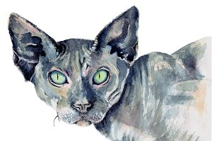 Cat sphynx in watercolor
