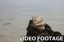 Big shell on a rock