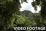 Mountains and rocks with jungle