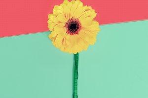 Gerber Flowers Minimalism