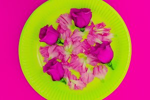Pink Roses Plate Minimal