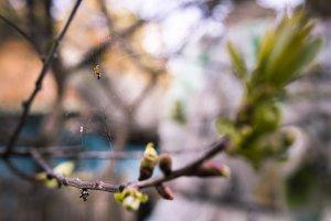 Spider in spring