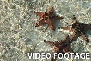 Starfish under water on sand.