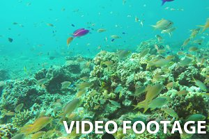 Coral reef and tropical Fish.