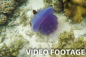 Beautiful jellyfish in tropical sea