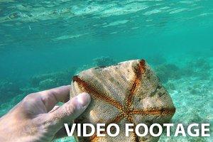 scuba diver holding a starfish