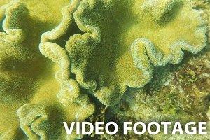 soft corals in tropical sea