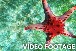 Starfish on the sandy bottom.