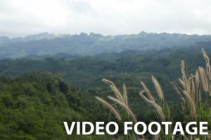 views of jungle mountains