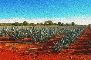 agave landscape