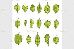 Leaves Set