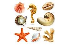 Seashells vector icons