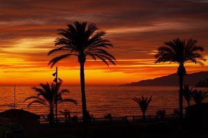 sunset and palm trees