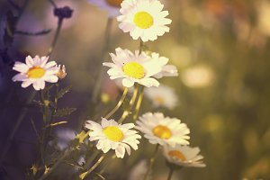 Retro flowers photograph