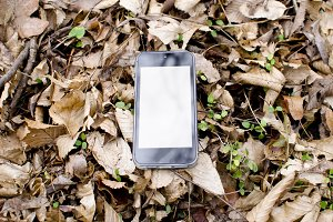 iPhone in forest