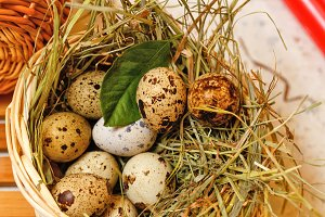Quail eggs in basket. Delicatessen.