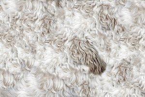 Dog's fur
