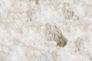 Dog's pelt