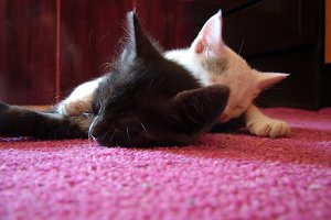 Black & White Kittens