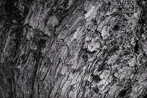 tree bark bent wave texture