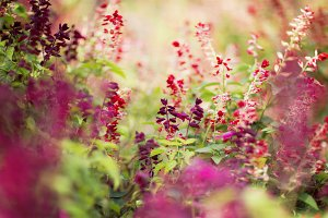 Burgundy and Red Wildflowers