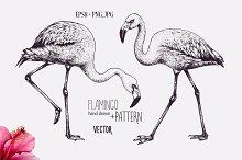 Flamingo graphic hand drawing