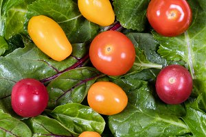 Green leaf salad and tomatoes