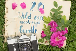 20 wild rose mock-ups bundle