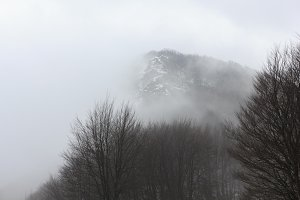 Cold and mist