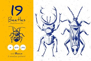 Beetles Hand drawn Set