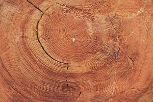 Annual Rings - Old tree