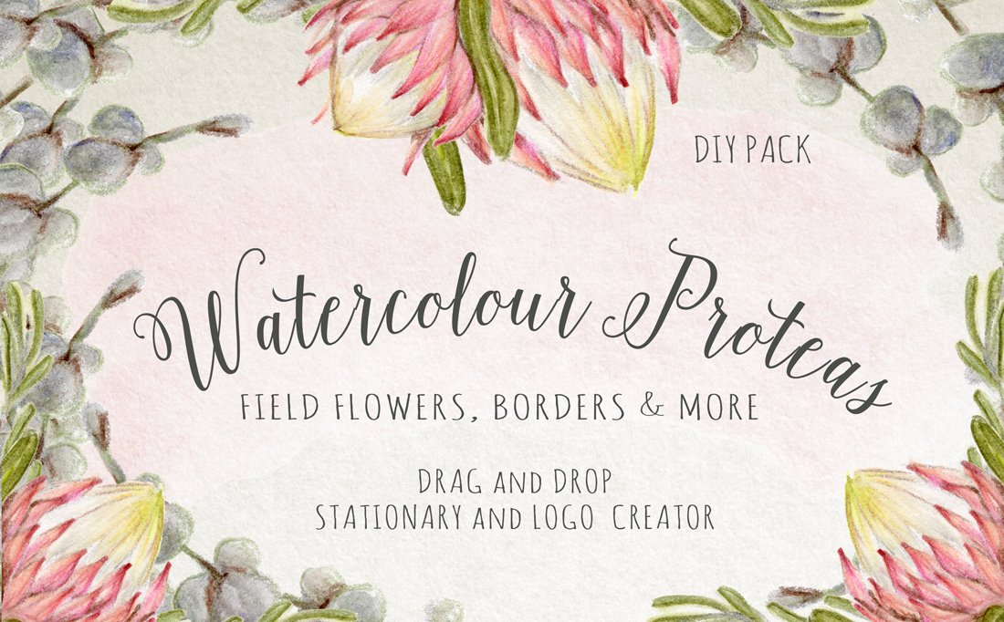 Watercolour Protea Flower DIY Pack Illustrations Creative Market