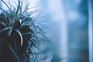Atrium Spiked Plant