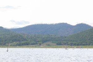 Dry tree dead in dam