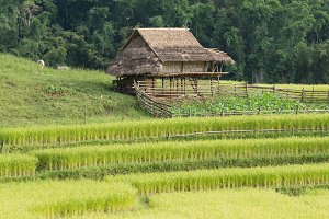 house is in the rice fields.
