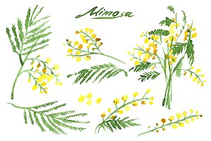 №82 Set of Hand-Drawn Mimosa
