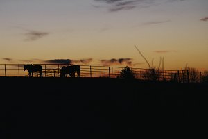 Horses at Sunrise