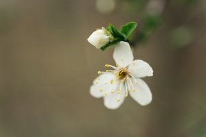 spring background with flower