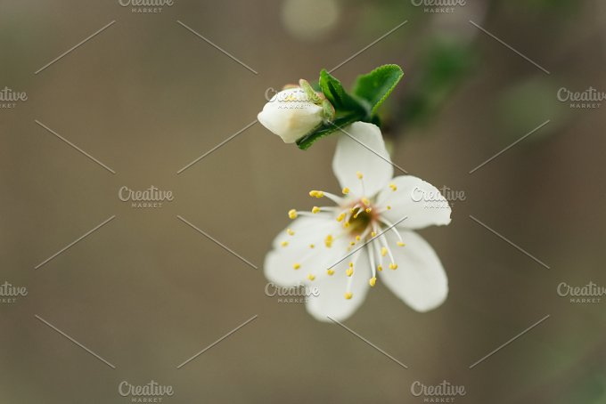 spring background with flower - Nature